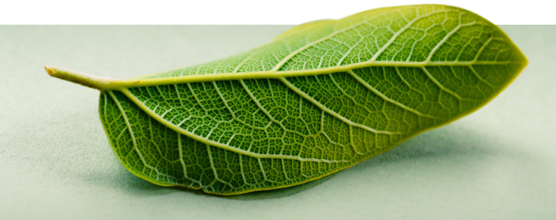 Környezetvédelmi engedély - Zöld Iroda Környezetvédelmi Kft.