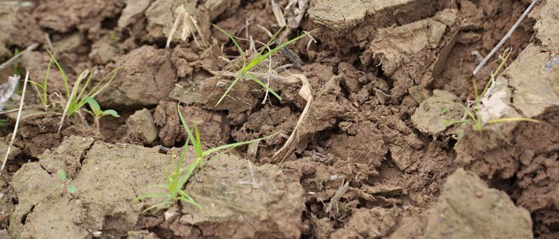 Talaj -talajvíz mintavétel Zöld Iroda Környezetvédelmi Kft.